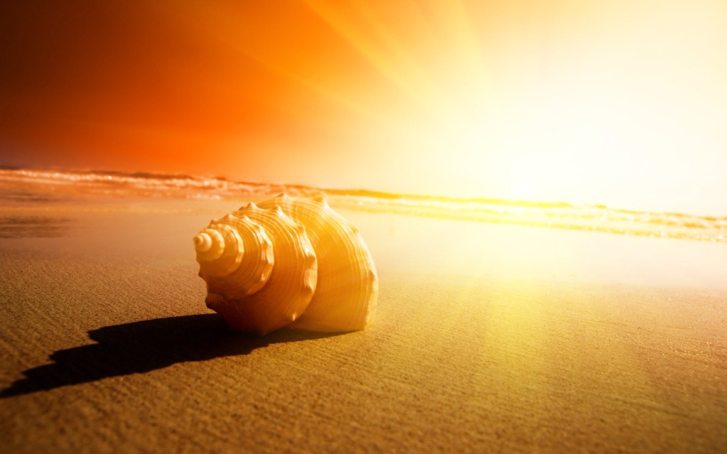 Seashell-and-sun