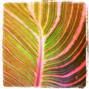 Plant Leaf Underside